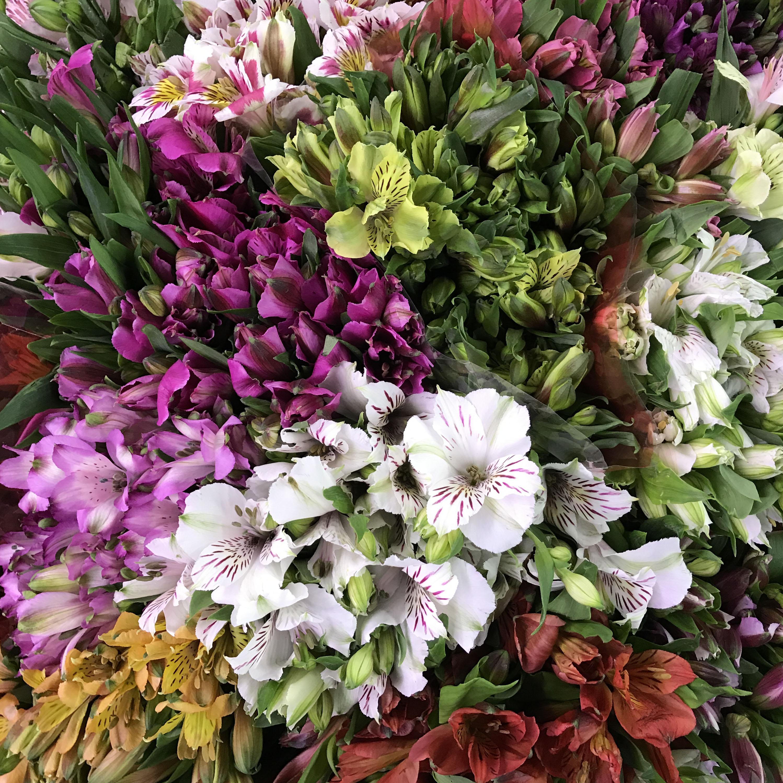 Alstroemeria Assorted Color Select - $6.88