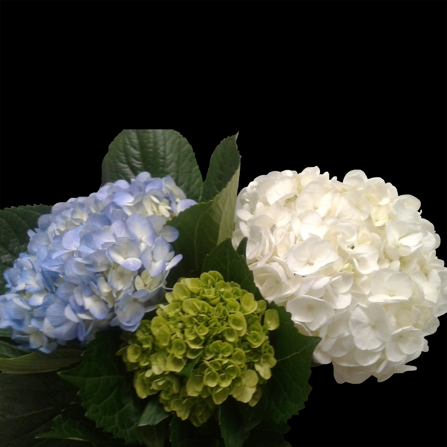 Hydrangea Mix with 10 Mini Green, 10 Select Blue and 10 Select White - $1.83